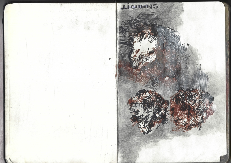 jacques-hemery-lichens-carnet-1
