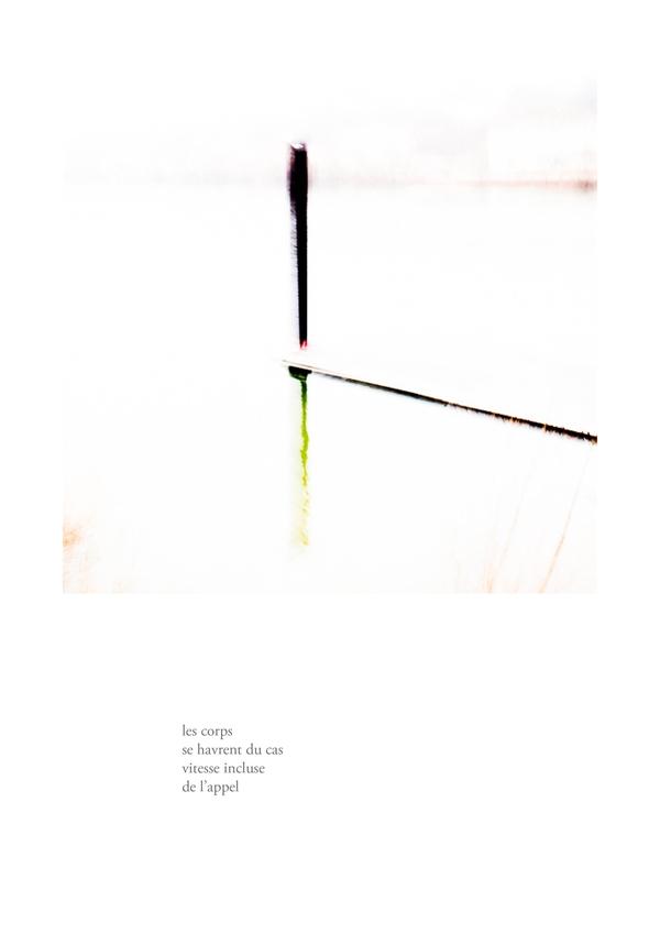 delizee-fabbiani-lithops-12