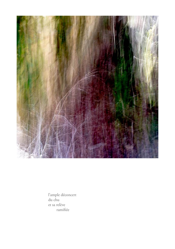 delizee-fabbiani-lithops-14
