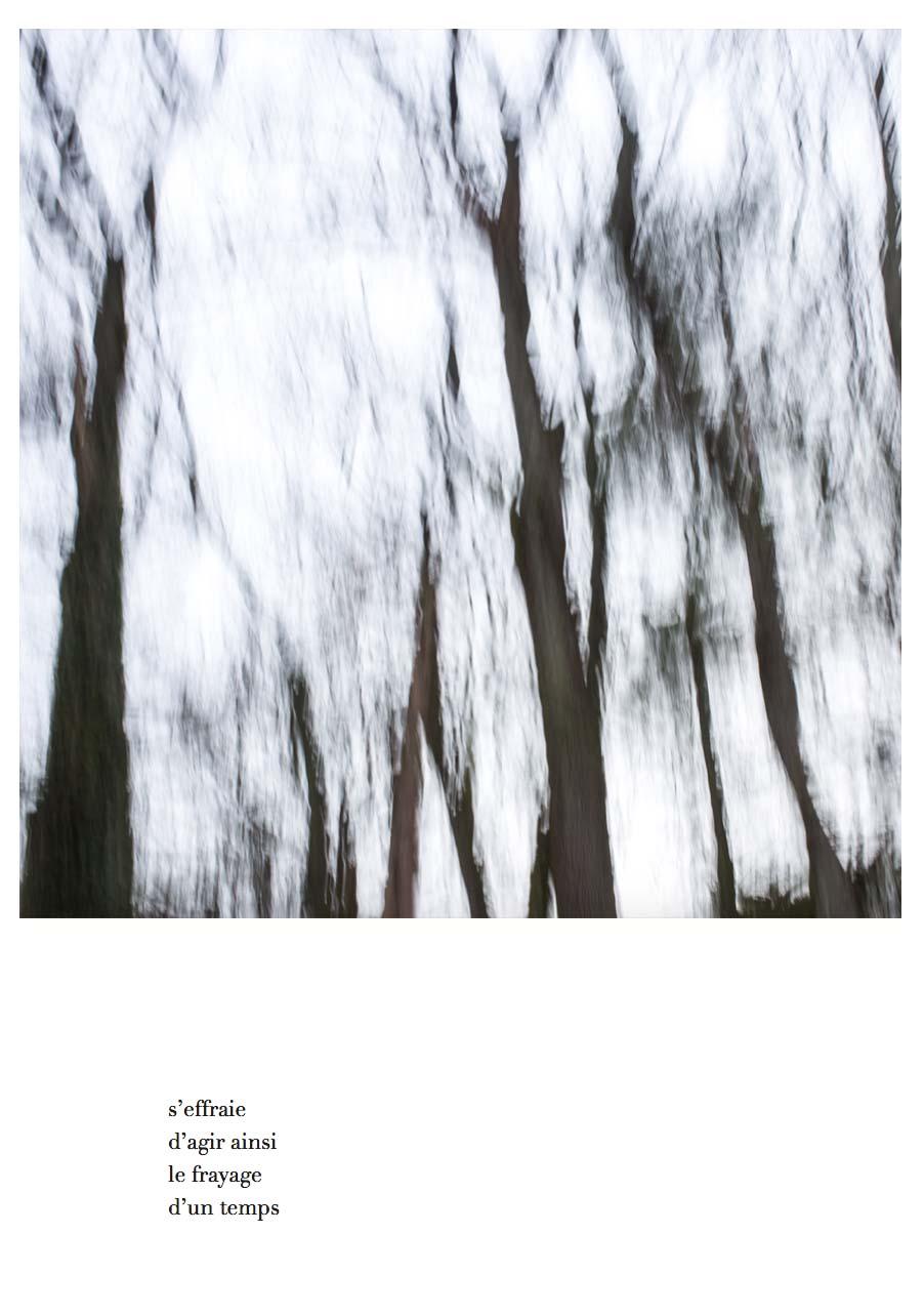 delizee-fabbiani-lithops-16