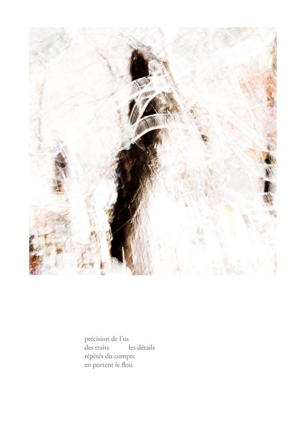 delizee-fabbiani-lithops-9
