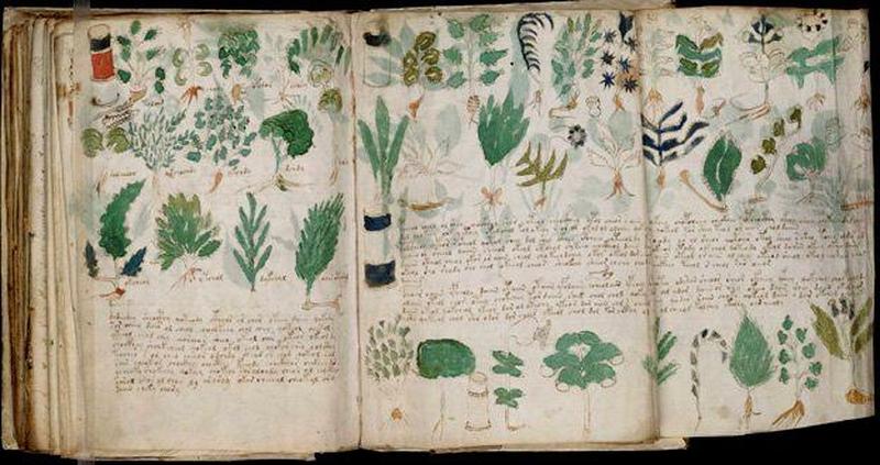 manuscrit-voynich-1
