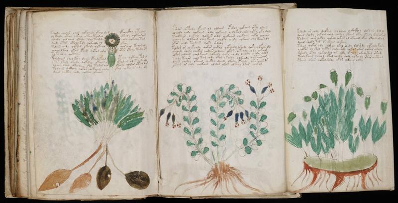 manuscrit-voynich-2