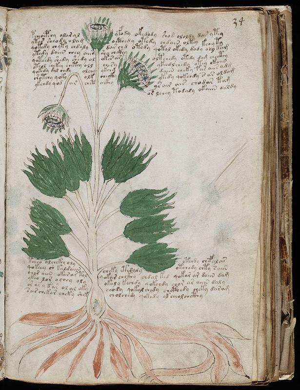 manuscrit-voynich-3