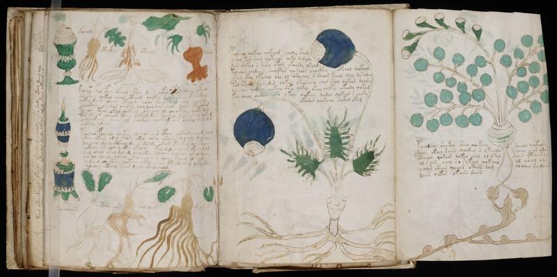 manuscrit-voynich-4