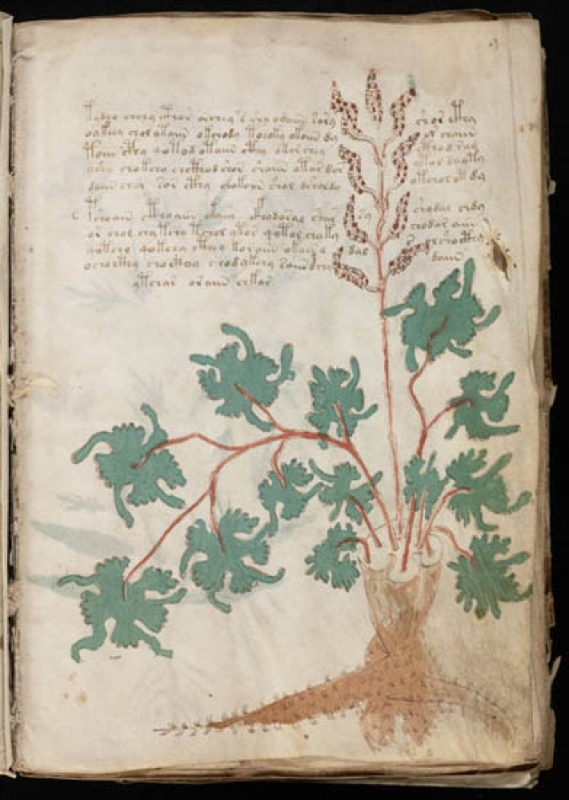 manuscrit-voynich-5