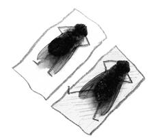 magnus muhr – la vie des mouches