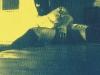 pln – cyanotype6